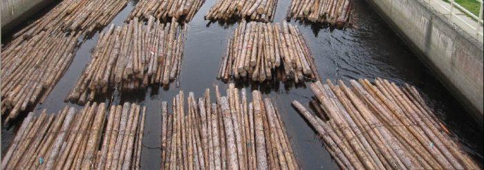 Logs in water
